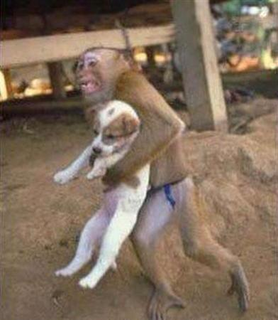 monkey rescuing puppy